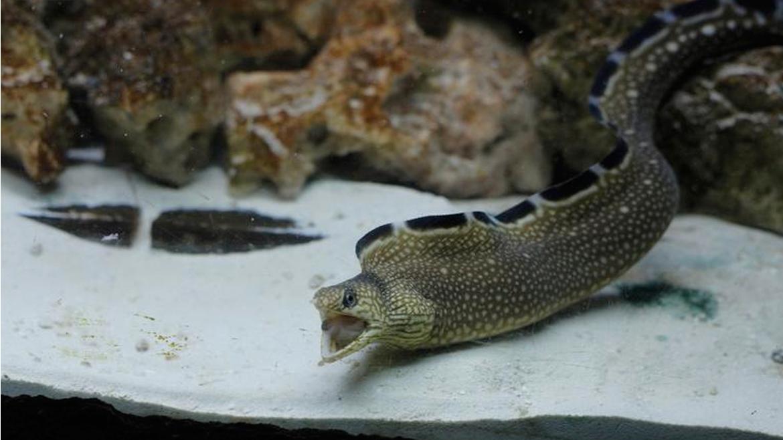 ¡Mes del mar en Aquamundo Aquarium!