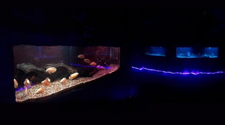 Descubre las maravillas del mundo acuático